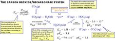 Description: Diagram of the CO2/bicarbonate physiological buffering system, showing equilibria, Ka values, and comments