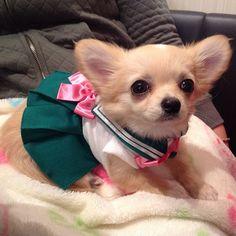 cosplay-sailor-moon-perros-japon