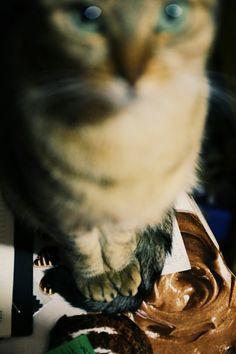 Lina Frida - cat