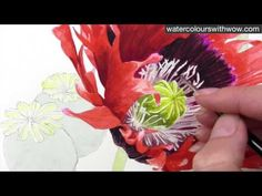 How to paint a detailed poppy in watercolor by Anna Mason - YouTube