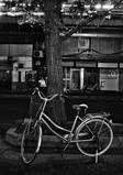 Bike_on_Tree_Tokyo_.jpg