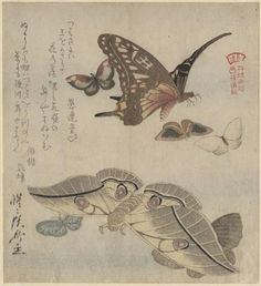 Kubo Shumman Poster Print Wall Art Print entitled Tsubasa ni wa, from the series Illustrated Collection of Butterflies, Japanese Woodcut, Woodblock Print, How Beautiful, Vintage World Maps, Wings, Museum, Cambridge, Insects, Wheels