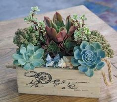 Container Gardening 14 Creative Succulent Container Gardens to DIY or Buy Now via Brit Co - Spruce up your space with these creatively potted succulents! Indoor Plants, Diy Succulents Centerpiece, Plants, Planting Flowers, Succulents In Containers, Flowers, Flower Garden, Container Gardening, Succulent Pots