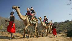Camel rides, Kenya