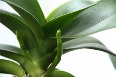 Nápady a Tipy House Plants, Plant Leaves, Gardening, Advice, Projects, Interiors, Blouses, Hydroponics