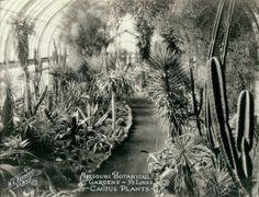 "Missouri Botanical Garden - St. Louis ""Cactus Plants."" (Shaw's Garden). (1929 to 1932)"