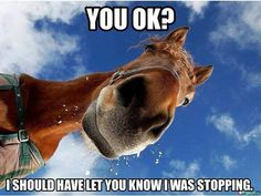 Ya my horse usually gives me this look of confusion of why I'm on the ground after she threw me off.....