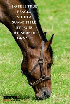 To feel true peace... sit in a sunny field by your horse as he grazes. Peaceful horse quote