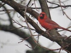 Choosing Joy [cardinal] www.beingbrave.fatih