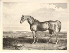 A horse in profile to l, standing in a field with sparse tufts of ground and the…