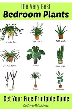Free Printable with the Best Bedroom Plants for Better Sleep tonight! These are the inexpensive and pretty plants you want to add to your bedroom to clean the air, give off oxygen and absorb toxins. house plants Best Bedroom Plants for Better Sleep