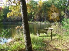 A Pond to Sit and Think or write song lyrics <3