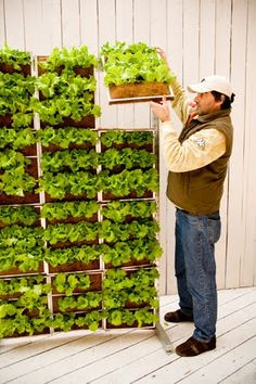 Vertical vegetable gardenold laddersgardenPinterest
