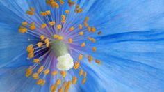 free desktop backgrounds for flower, 1920x1080 (202 kB)