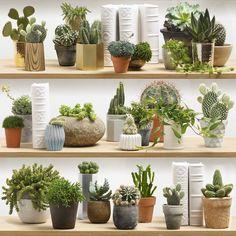 Cactus stylisées sur étagères