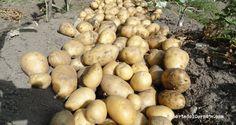 Dejamos las patatas unas horas al sol para que se sequen