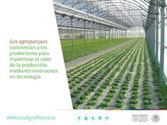 Los agroparques concentran a los productores para maximizar el valor de la producción, mediante inversiones en tecnología.  SAGARPA SAGARPAMX #MéxicoAgroPotencia
