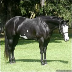 Black Horse | Black Overo Paint Horse Image, Graphic, Picture, Photo - Free