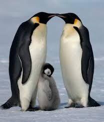 Bildresultat för walking penguins cute