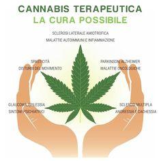 Cannabis terapeutica, se ne parla a Catanzaro in un convegno