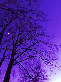 #sky #grunge #vibrant #night #tree #violet #photography #vaporwave  https://weheartit.com/entry/324633787 Violet Aesthetic, Rainbow Aesthetic, Aesthetic Colors, Aesthetic Photo, Aesthetic Pictures, Character Aesthetic, Lilac Sky, Pastel Purple, Purple Rain