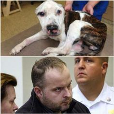 This monster is going back to court Feb 11th. (Radoslaw Czerkawski to be held on no bail; Puppy Doe will see justice.  December 19, 2013  Puppy Doe suspect Radoslaw Czerkawski appeared in Superior Court today for 12 counts of animal cruelty and 1 count of misleading police.  The 12 counts of animal cruelty include starvation, willful abandonment, right eye stab wound, two deep nose injuries, cut to the tongue, multiple fractures to the head...)