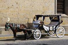 ¡Disfruta de un paseo en carruaje por las callecitas coloniales de #Guadalajara! Oportunidades únicas para vivir al máximo de las oportunidades que da #Mexico. http://www.bestday.com.mx/Guadalajara/ReservaHoteles/