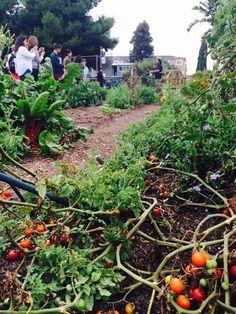 Creative funding: Tomato garden tax break. for more pins see the urban imagined https://pinterest.com/urbanimagined/