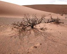 31 Best Gobi Desert images in 2017 | Gobi desert, Deserts