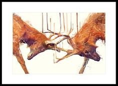 Stags // Strong Framed Print by Amy Hamilton