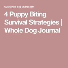 4 Puppy Biting Survival Strategies | Whole Dog Journal