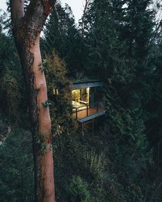 Away from the city, perched high in the forest amongst the madrone trees. 🌲 Would you live here? We would.