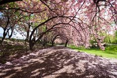 Start your week right! Spring in Central Park