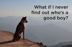 Dog's philosophical questions, #1.