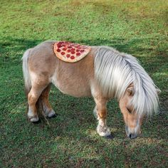 A PHOTO SERIES OF PIZZAS HANGING OUT IN UNUSUAL PLACES