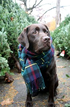 Keep pets warm with the gift of love by donating blankets to animal shelters in your area.