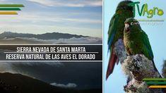 Sierra Nevada de Santa Marta: Reserva Natural de las Aves El Dorado - Tv...