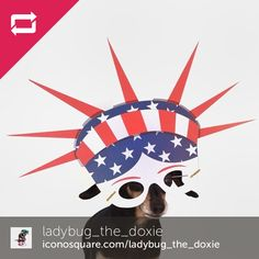Dogs of the World Cup #WorldCup #TeamUSA