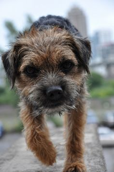 Oliver by Rainfire Photography, via Flickr