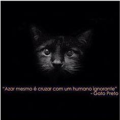@ Gato Preto