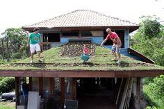 telhado verde 2