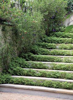 Escada com degraus mais largos, para plantinha selaginela - exige poucas podas, crescimento lento.