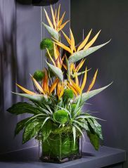 Tropical Birds of Paradise and Dianthus in a Glass Cube