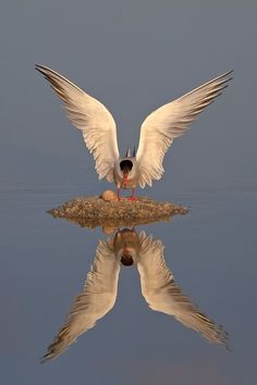 Reflection -- An amazing photograph..