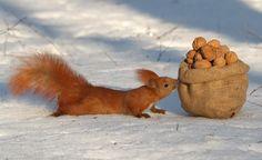 Vögel werden im Winter regelmäßig gefüttert, aber Eichhörnchen gehen meist leer aus. Dabei sind auch die possierlichen Kletterkünstler in strengen Wintern vom Hungertod bedroht.