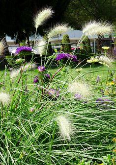 Mein Glück im August - Ideen - Garten - Gartengestaltung - Blumenbeete anlegen - flowers -gräser - natur