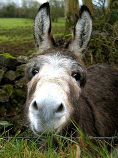 Donkey..looking pretty sweet !