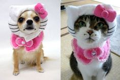 dog couture costumes | 2011 Fash-Halloween Costume Ideas: Smurfette or Hello Kitty | Fash ...
