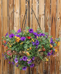 This Moss Hanging Basket Overflows With Mixed Bright Colored Outdoor Blooming Plants Perfect For A Sunny Area And Mother S Day