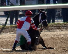 Eight Belles, Down Near the Finish Line at the Derby; it is Here That She Had to be Put Down.